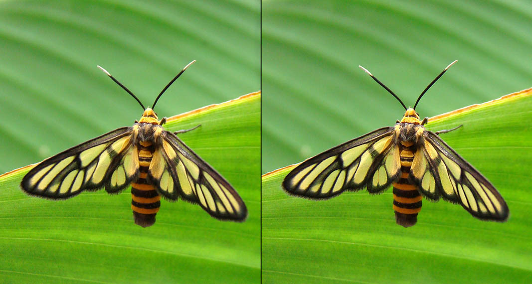 Как сделать фотографию четкой в фотошопе